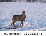 Beautiful Deer Forest And White ...