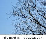 Bare Branch Tree With Blue Sky...