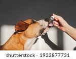 Dog Taking Essential Oil From...