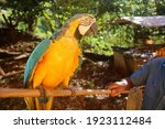 Photo Of A Parrot Taken In...