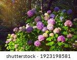 Beautiful Multicolored Flowers...