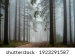 Small photo of Road in forest mist view. Forest mist. Fog in forest mist. Misty forest trail view