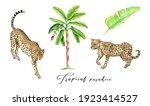 banana palm tree  jungle leaf ... | Shutterstock . vector #1923414527