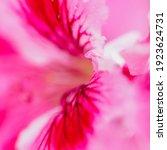 Pink Petal Of Blooming Flower ...