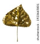 Decayed Autumn Dry Poplar Leaf