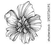 peony flower. floral botanical...   Shutterstock .eps vector #1923726191