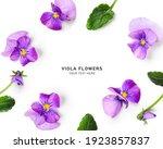 Viola Pansy Flower Creative...