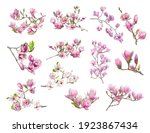 Pink Magnolia Flower Isolated...