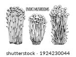 enoki mushrooms vector... | Shutterstock .eps vector #1924230044