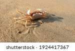 Small Sea Crab On The Beach...