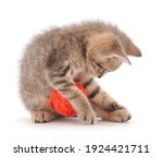 Little Kitten Playing With A...