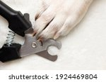 Dog's Paws. Claw Cutter Trimmer ...