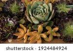 Decorative Succulents...