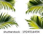 Green Tropical Palm Leaf ...