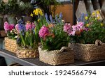 Happy Spring Mood Baskets Of...