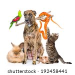 funny group of diverse animals. ... | Shutterstock . vector #192458441