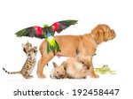 Stock photo group of exotic pets isolated on white background 192458447