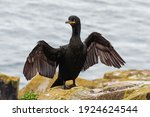 Shag Drying Its Wings On Inner...