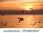 Silhouette Seagull Birds Flying ...