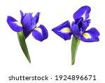 Set Of Purple Iris Flowers...