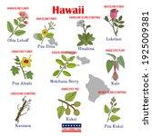hawaii. set of usa official... | Shutterstock .eps vector #1925009381