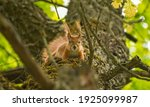 Wild Squirrel On A Tree Trunk ...