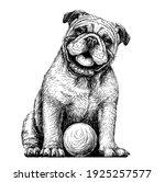 Bulldog With The Ball. Black...