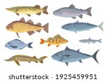 sea and freshwater fish set.... | Shutterstock .eps vector #1925459951