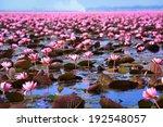 Lotus Field Lake Large In Udon...