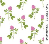 hand drawn red clover on a... | Shutterstock .eps vector #1925617247