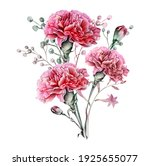 Watercolor Carnation Clipart  ...