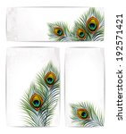Set Of Vector Peacock Feathers...