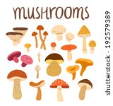 Different Types Of Mushrooms...