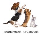 Stock photo group of dog standing on hind legs 192589901