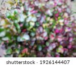 Defocused Abstract Background...
