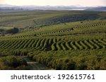 alfenas  minas gerais  brazil   ... | Shutterstock . vector #192615761