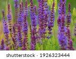 Wildflowers. Meadow Flowers....