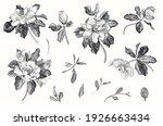 magnolia grandiflora. vector... | Shutterstock .eps vector #1926663434