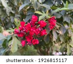 A Beautiful Bush Of Red Flowers