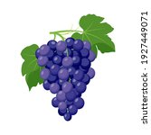 bunch of blue grapes. grape... | Shutterstock .eps vector #1927449071