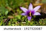 Wild Plants  Wild Flowers ...