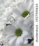 white flowers on a blurred... | Shutterstock . vector #1927545614
