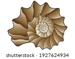brown nautilus shell. sea shell.... | Shutterstock .eps vector #1927624934