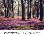 Amazing Nature Spring Landscape ...