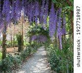 Dreamy Wisteria Flower Tunnel...