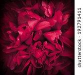peony flower for background.... | Shutterstock . vector #192791411
