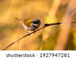 A Brazilian Bird Called Tico...