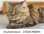 Happy Cat Sits On The Bed. A...