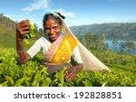 Indigenious Sri Lankan Tea...