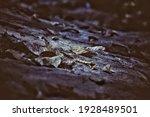 Dead Leaves On The Ground. Dark ...